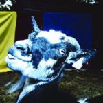 Barely Autumn - Day Trip To The Petting Zoo (★★★): Een dagtrip langs verschillende stijlen